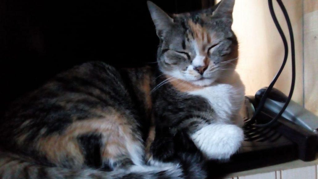 Una mascota sirve de compañía, pero hay que cuidarla, si no se manda para Pto. Montt, como le pasó a ella.