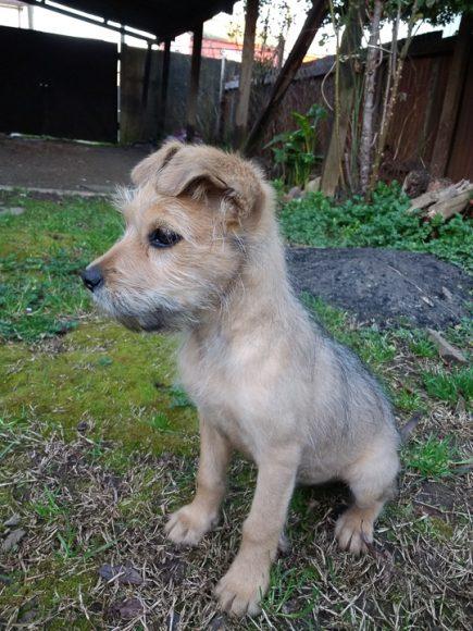 Kai es el integrante más pequeño de la familia, mi hermano lo adopto cuando solo tenía 3 meses.