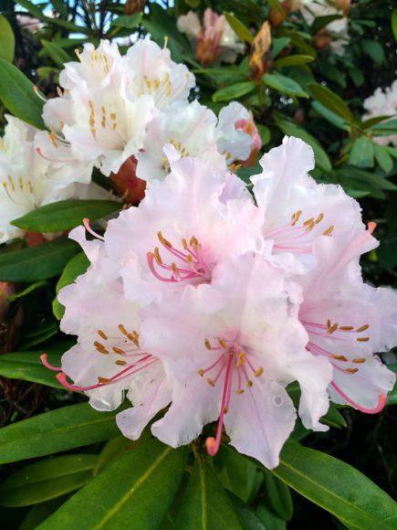 Quiero con mi alma que comience una primavera decente en Valdivia, con solcito y flores.