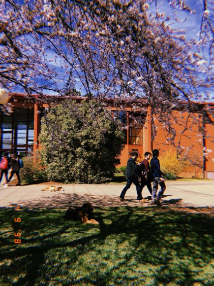 Estudiantes caminando cerca de la facultad de derecho junto a un perro descansando bajo la sombra.