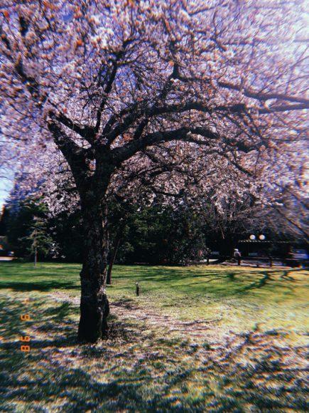 Árbol floreciendo en plena primavera una tarde de sol.