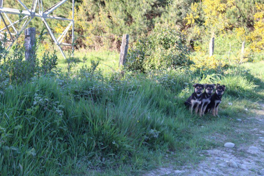 Esta imagen la tomé a la rápida en una ida al campo, estos tres perritos estaban abandonados en medio del camino, eran tan tiernos y pequeños que no me explico como puede existir gente que abandona así a sus mascotas.