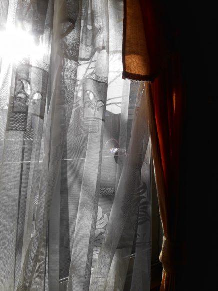 Todas las mañanas despierto con el sol dando a mi ventana, me encanta mirar mi patio los días de verano, porque los dos ciruelos y el cerezo le dan una sombra veraniega a un patio de tierra.