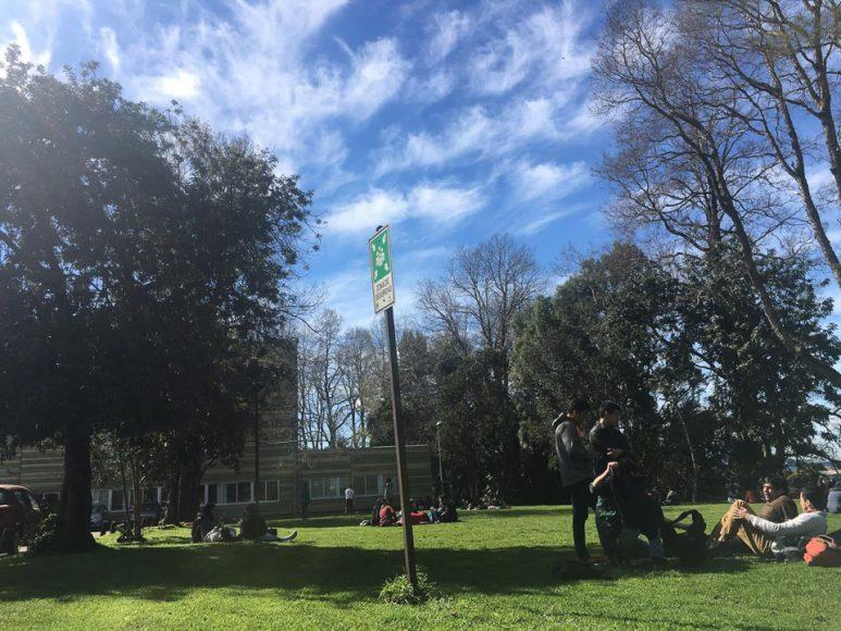 Los pastos del Cidfil, un lugar que te conecta con la naturaleza y la buena onda de la comunidad de estudiantes.