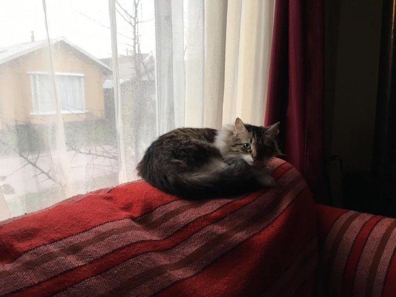 4.La Kichi, una felina que arribó hace unos meses al hogar. Bastante agresiva, por cierto. Sin embargo, como todos, también tiene su lado tierno.