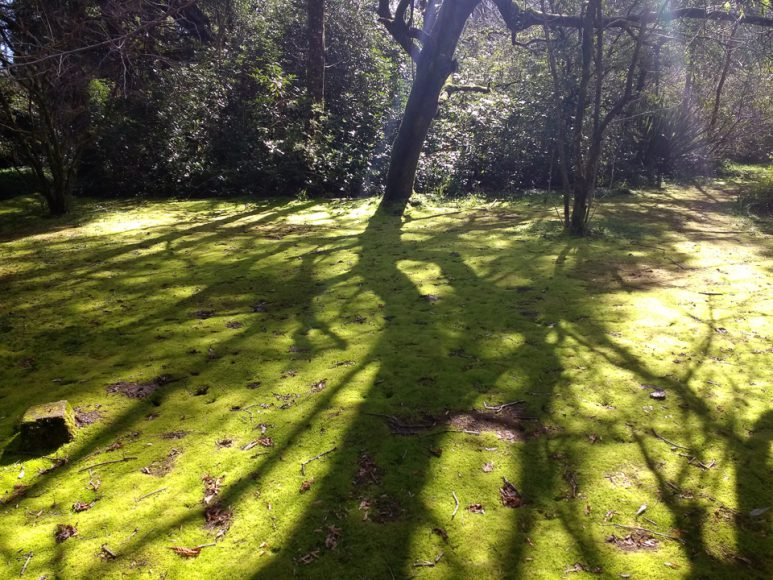Distintas temperaturas, árboles y bosques.