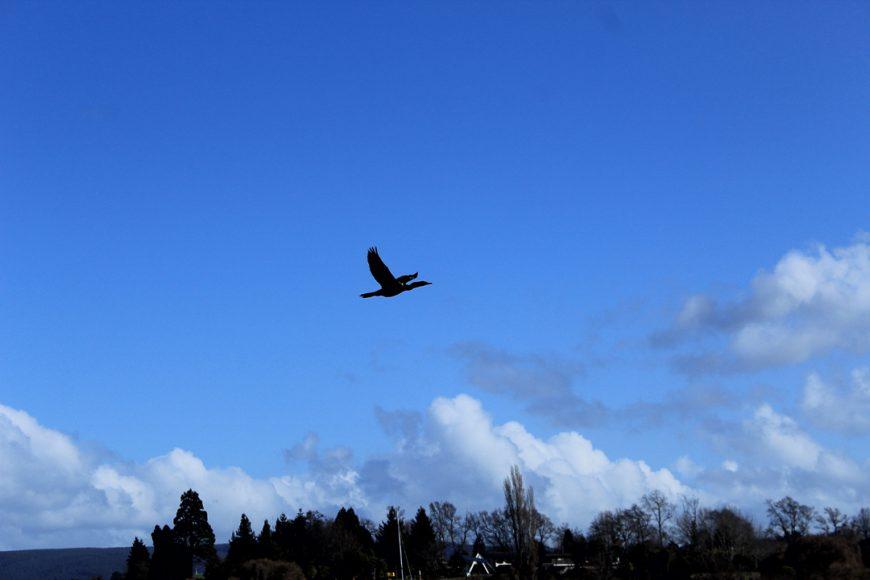 El cielo en distintas horas y distintos contextos. Una gaviota planeando en azul extenso, parece sin límite. Un cielo soleado, entregando alegría al día.