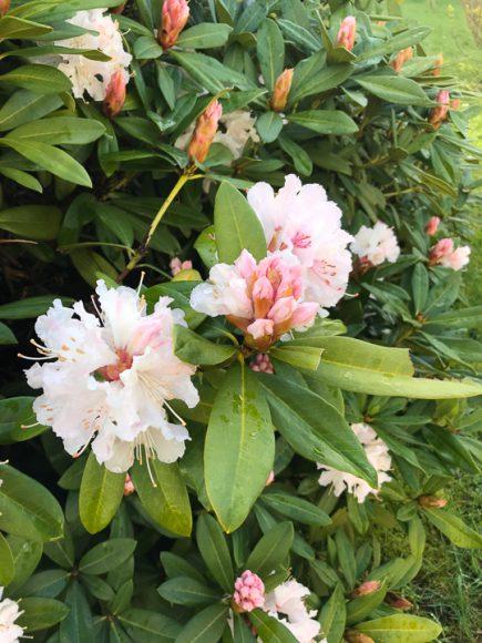 Flores de la Facultad de Humanidades.