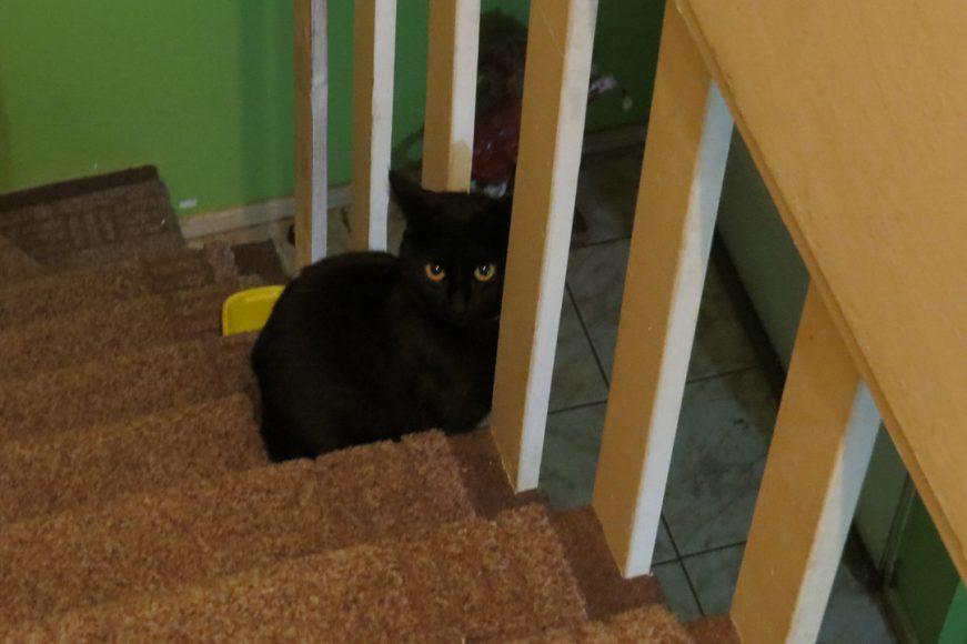 "La Luna Amaranta, mi gatita, la que me da ""mala"" y buena suerte a la vez."