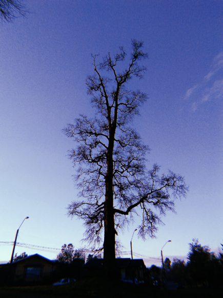 Silueta de un árbol en una plaza.