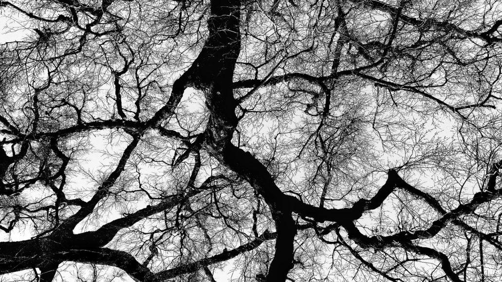 Ramas de los árboles en blanco y negro.